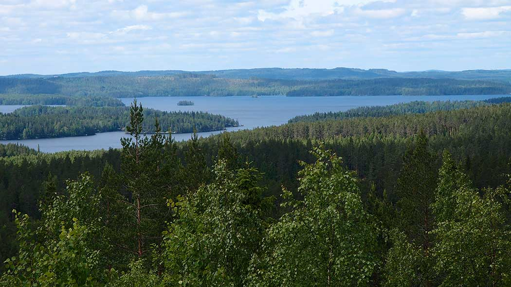 Summer view of forests and lakes from the top of a mountain.