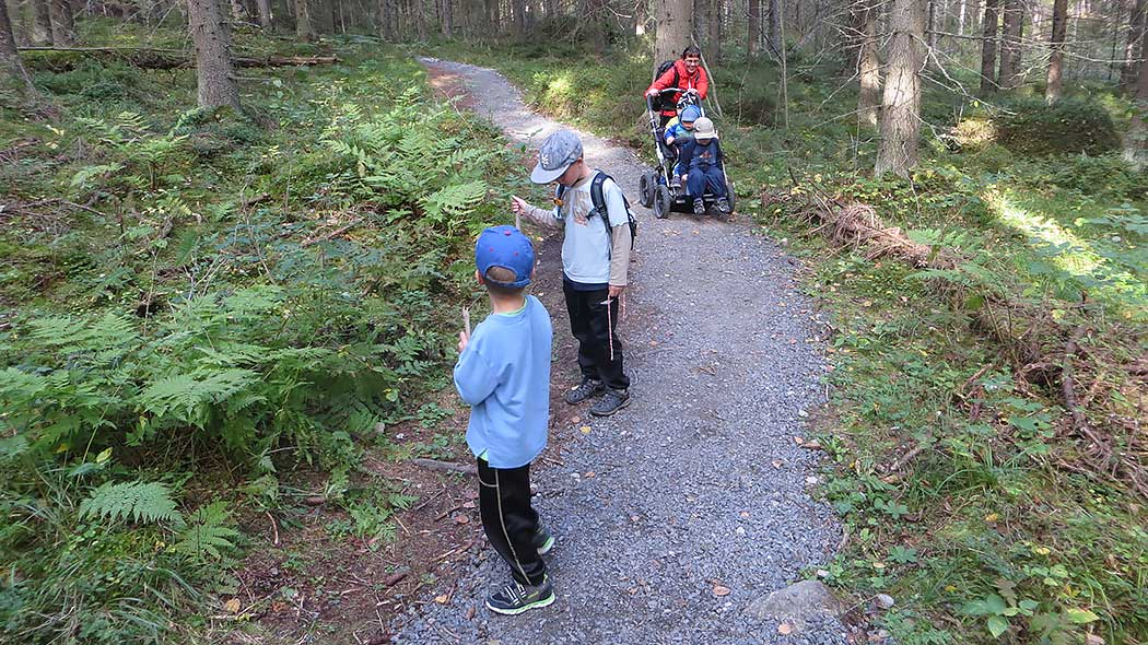 On a gravel path in the forest, a woman is pushing a stroller with two children. Older children are observing the nature.