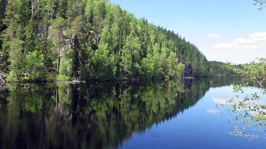 Summer landscape by a lake. A mirror image of the forest is visible in the calm water.