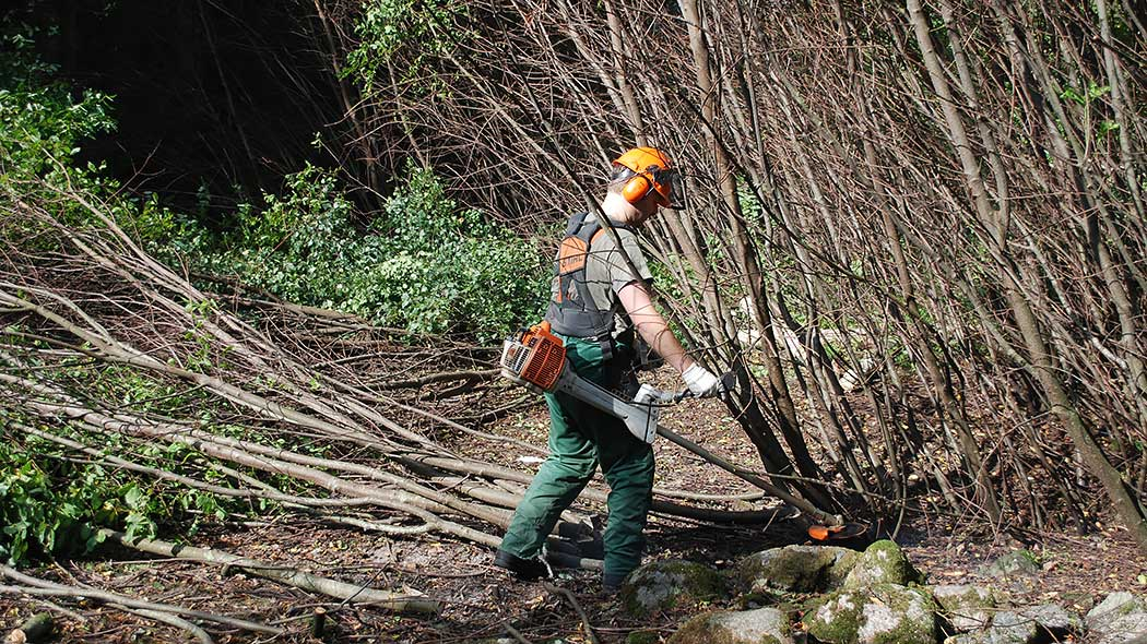 A volunteer worker clearing a coppice.