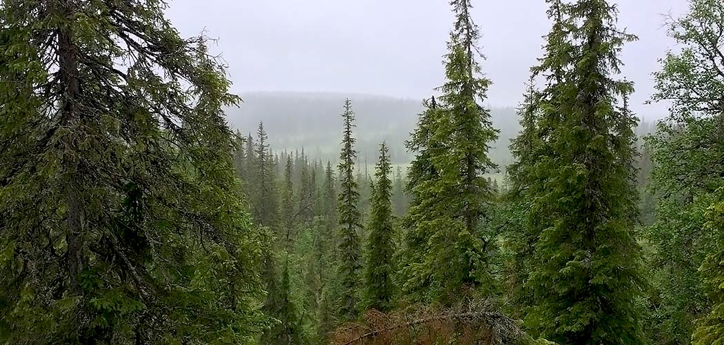 A slope covered in coniferous forest photographed from above.