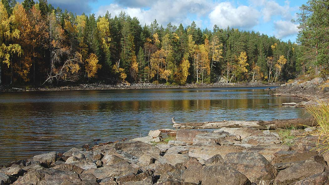 View of the rocky shores on Kaunislampi. In the background, the deciduous trees are in fall colours.