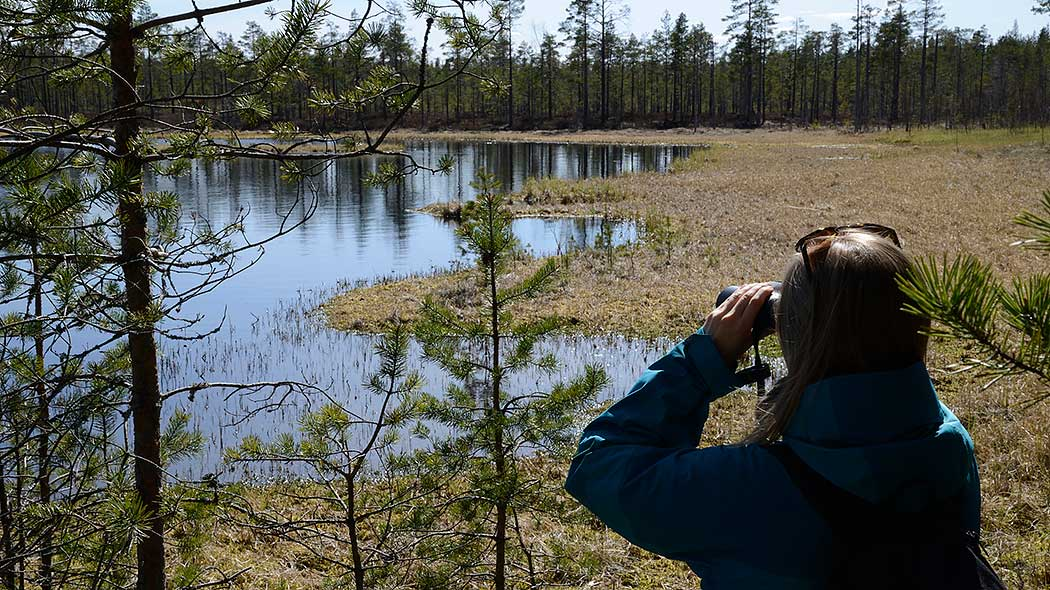 A woman is standing by the swamp pond and using binoculars for bird watching.