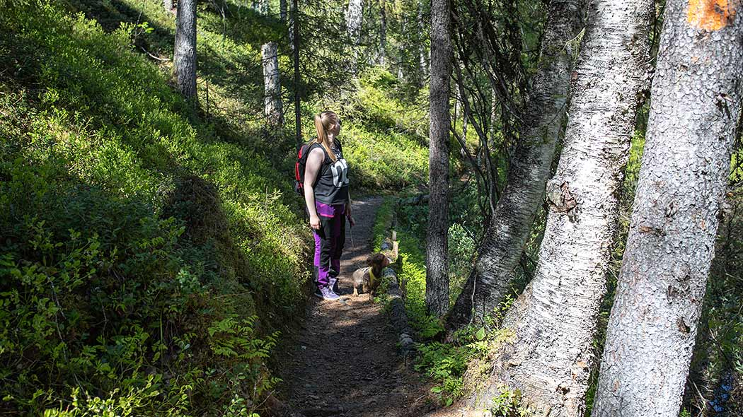 A gravel path leading through the dense forest and shrub. A woman with a small dog on a leash standing on the path.