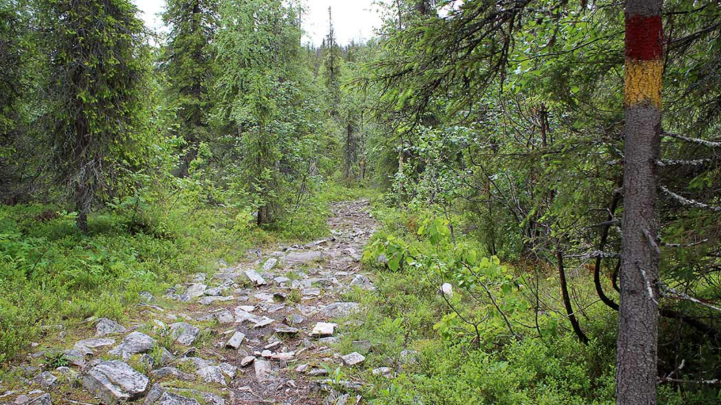 Trail with a lot of rocks sticking from the ground, surrounded by a forest view.