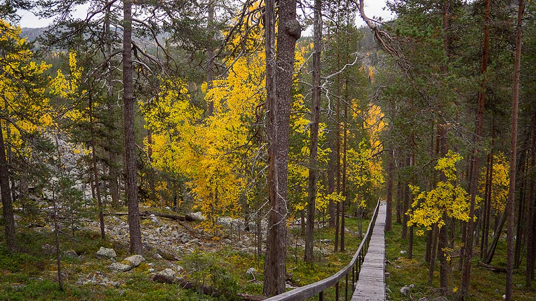 Fall colors along the trail and wooden trail steps in a forest with larger rocks beside the trail.