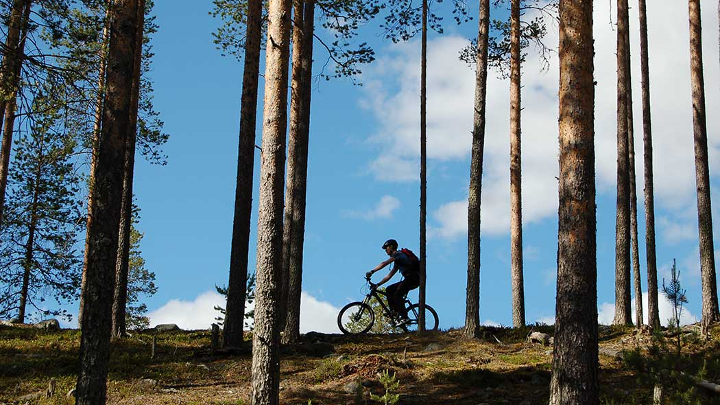 A mountain biker on top of a hill with pine trees all around.