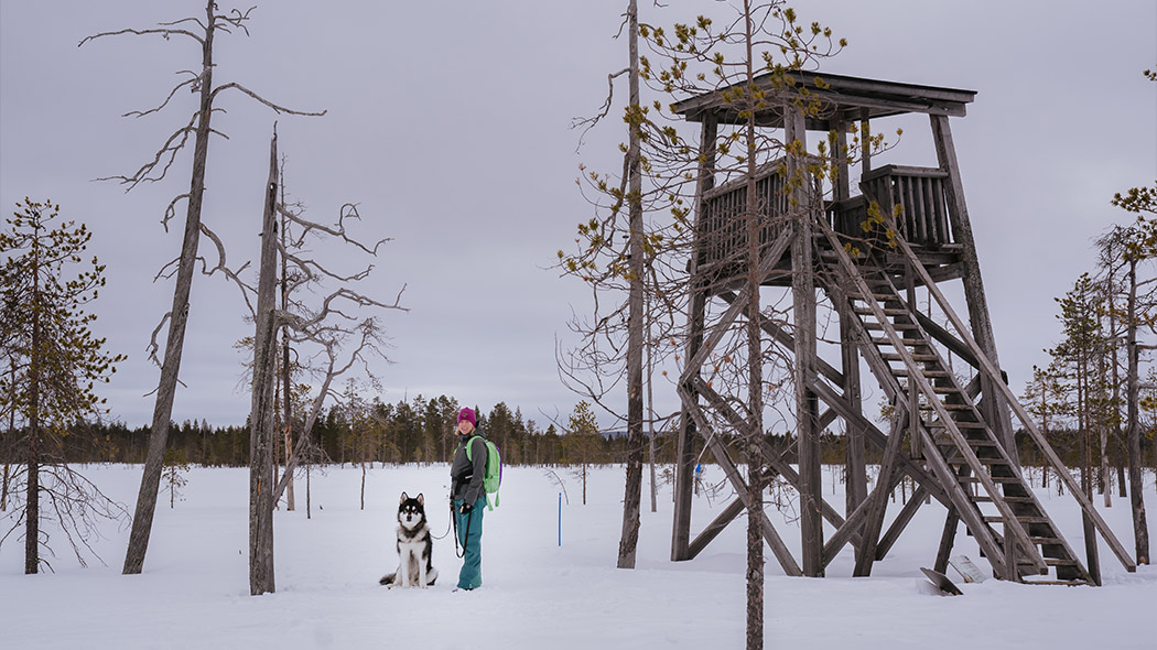 A bird watching tower in a winter landscape with a person standing next to it with a dog on a leash.