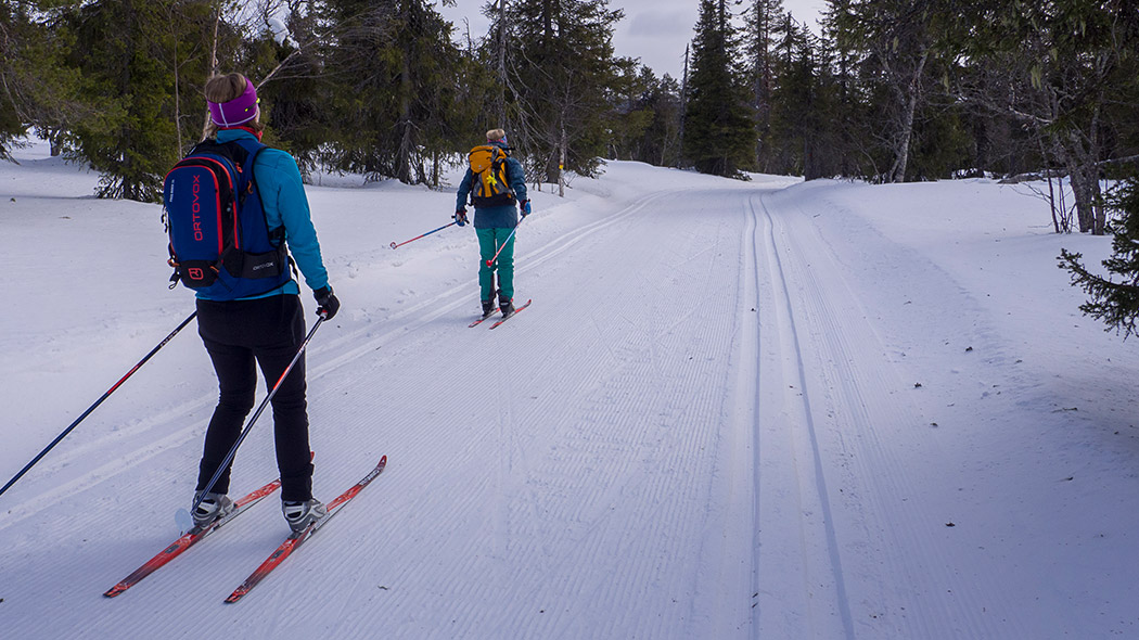 Two skiers on ski tracks with forest in the background.