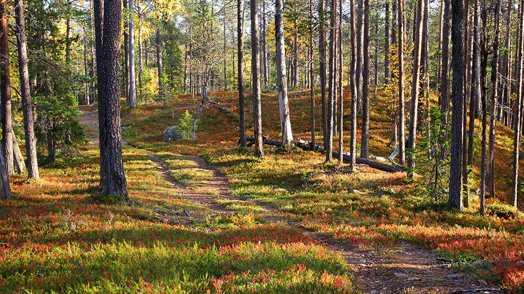 A forest trail in the autumn.