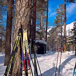 Several pairs of skis and ski poles are leaning against a large pine with snowy forest in the background.