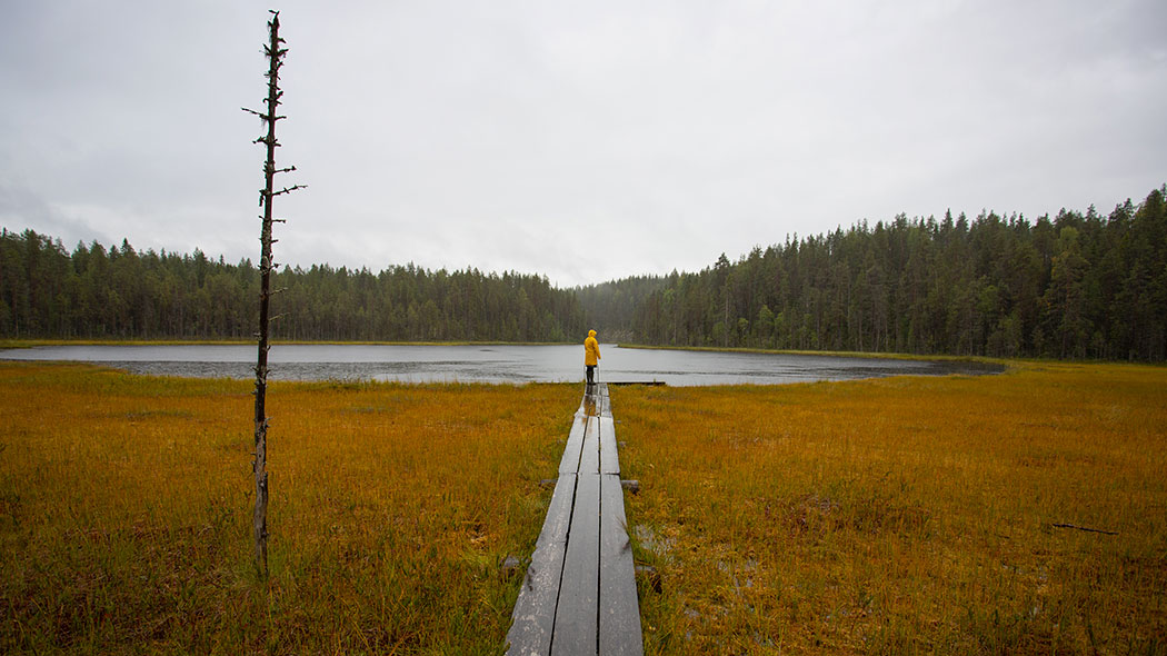 A man stands in the rain at the end of a wooden footpath leading to the edge of a pond. There is forest on the other side of the pond.