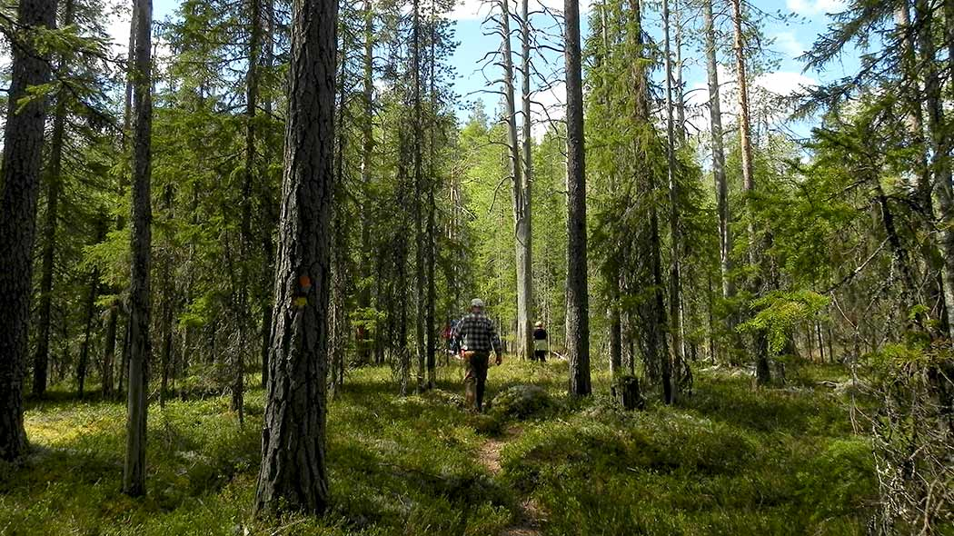 Two hikers on a path surrounded by summer forest.