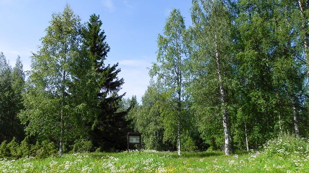 In the middle of the summer flower meadow grow birches and a big bushy spruce. There is a signboard in the shade of the trees.